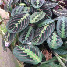 15 plantas ornamentais que adoram sombra e são fáceis de manter bonitas