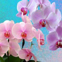 Aprenda a plantar orquídeas e outras flores em sua casa